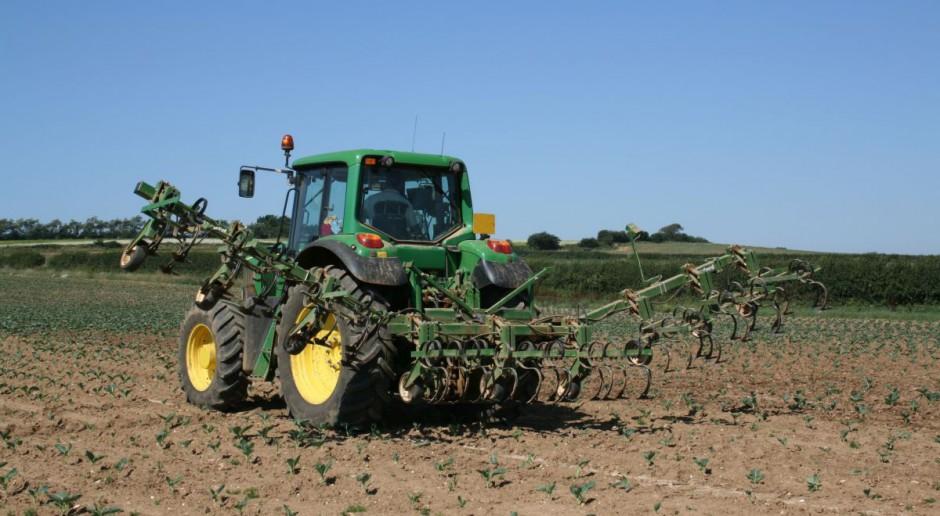 Jaka pomoc dla producentów cebuli, jabłek i kapusty