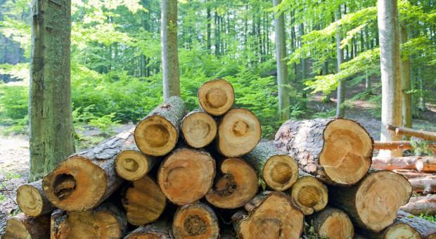 PO, PSL i SLD za projektem zmiany konstytucji dot. lasów