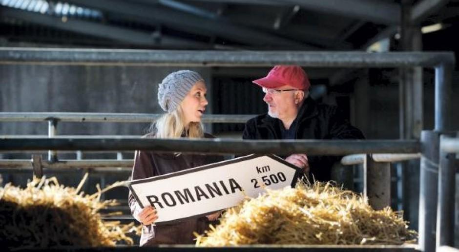 Irlandczycy podarowali cielne jałowice mieszkańcom Rumunii