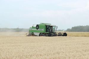 Producenci zbóż: dobre zbiory, ale niskie ceny