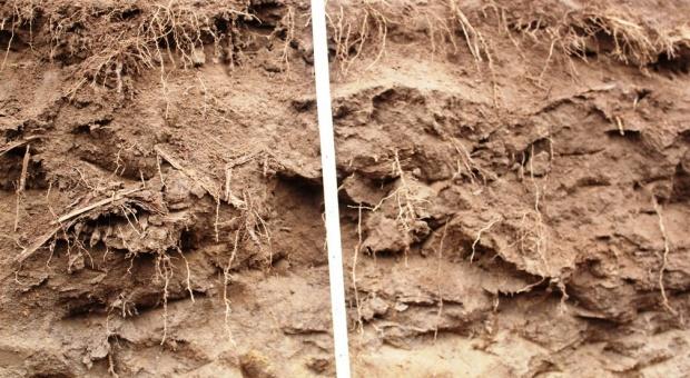 Gleba może być wyczerpana ze składników pokarmowych