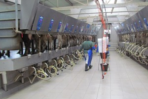 ARR: będą wysokie kary za przekroczenie kwot mlecznych