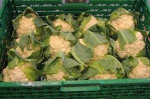 Ponad 97 proc. żywności bez przekroczonych norm pozostałości pestycydów
