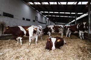 Maksymalne stawki ubezpieczeń upraw i zwierząt na 2015 r.