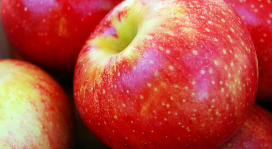 Będą dodatkowe środki z UE dla polskich producentów jabłek