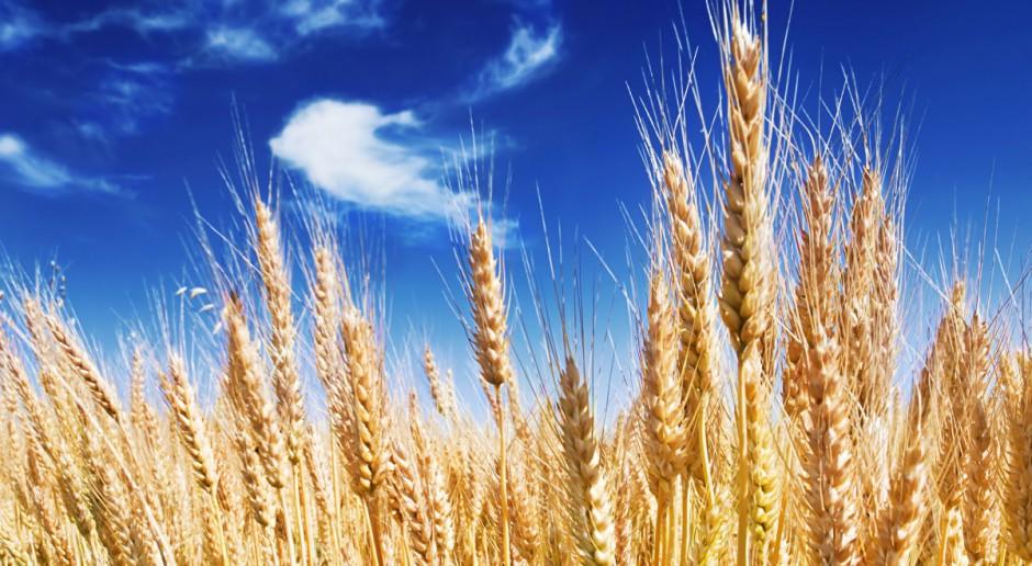 UE: 22 mln ton ziarna zbóż więcej niż przed rokiem