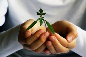 Wymogi dotyczące nabywania środków ochrony roślin