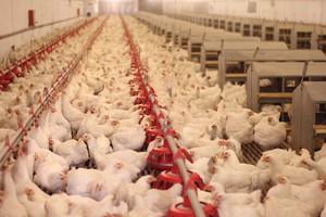 Nowe przypadki ptasiej grypy na świecie