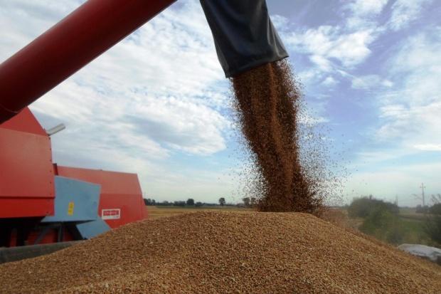 Rekordowe zbiory zbóż w 2014r.