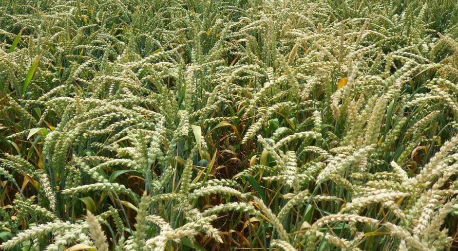 Projekty o ochronie zdrowia roślin skierowane do prac w komisji rolnictwa