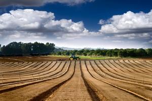 W Holandii przypada najmniej gruntów rolnych na mieszkańca