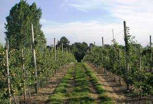 Zmiany w Integrowanej Produkcji Roślin