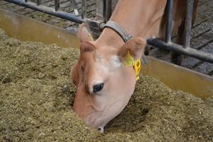 Modyfikowanie zawartości witaminy E w mleku