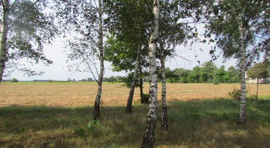 Wycinanie drzew po nowemu