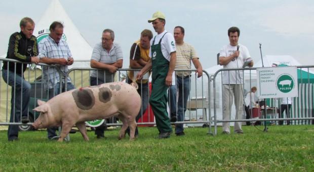 W tym roku wydamy ponad 8 mln zł na promocję wieprzowiny