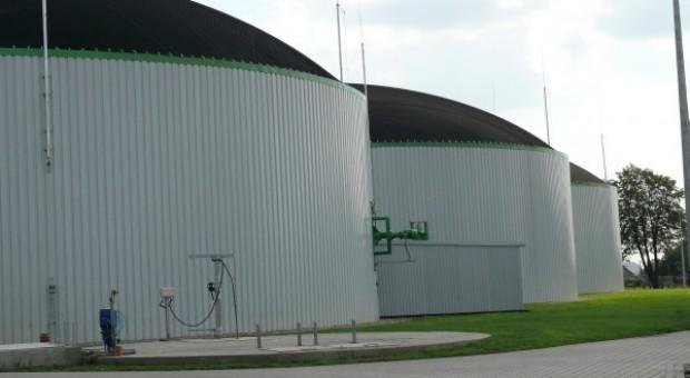 Maliszewski: Niezagospodarowane jabłka powinny trafić do biogazowni