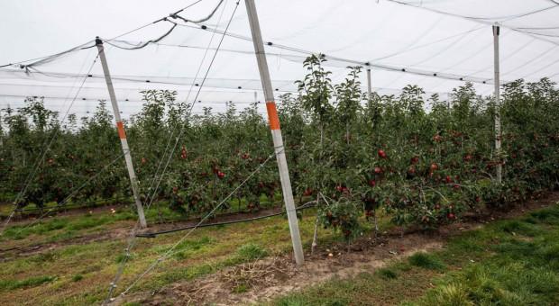 Prezes IPCCI: liczymy na szybką zgodę na wwóz polskich jabłek do Indii