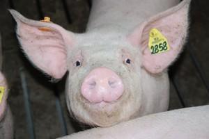 Ministrowie rolnictwa oczekują od KE wyjaśnień ws. rosyjskiego embarga