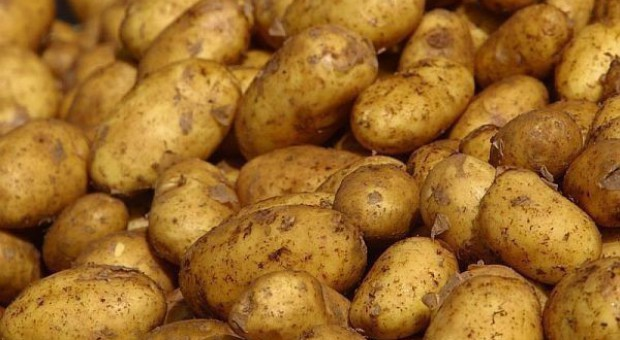 Nowe odmiany ziemniaka w rejestrze