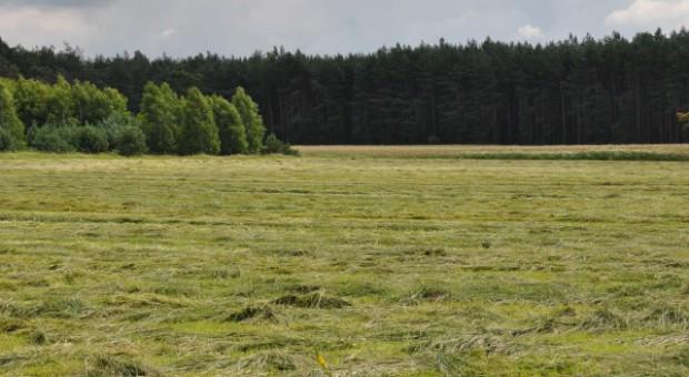 Koalicja PO-PSL nie chce prywatyzacji Lasów Państwowych