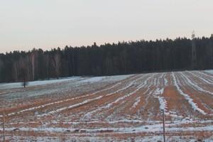 Spółki łatwo mogą obchodzić limit nabywania do 500 ha ziemi