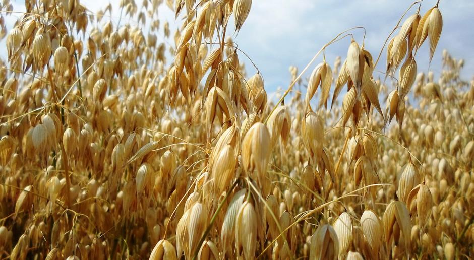 Odchwaszczanie owsa obniżonymi dawkami herbicydów