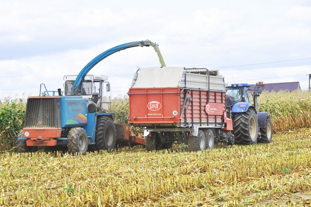 Nawożenie kukurydzy osadami ściekowymi