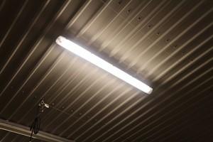 Światło dla drobiu – niezbędny element produkcji