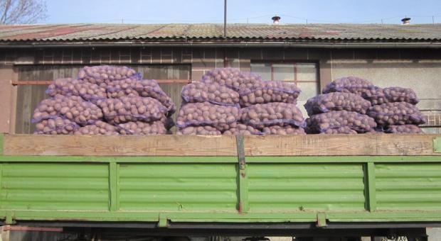 Wymogi fitosanitarne związane z Cms, utrudniają eksport ziemniakiem