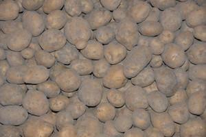 Komu płatność do ziemniaków skrobiowych
