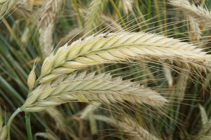 Co się kryje pod nazwą roślina hybrydowa?