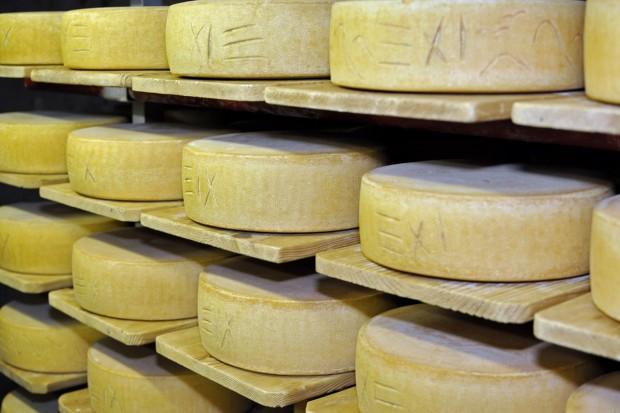 Jak Europa radzi sobie z nadwyżką produktów mleczarskich w obliczu embarga?