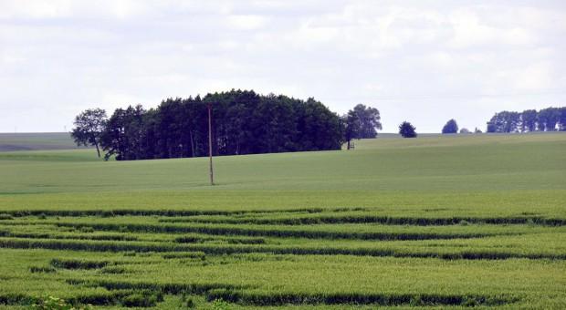 Efektywność stosowania regulatorów wzrostu w pszenicy