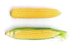 Nowości odmianowe kukurydzy