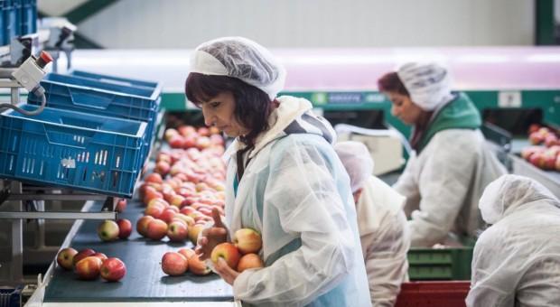 Rosja zagroziła Serbii embargiem z powodu reeksportu jabłek z Polski
