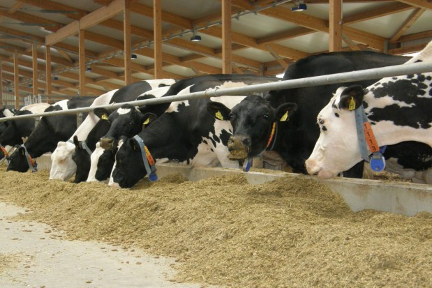 Z dobrej trawy dużo mleka
