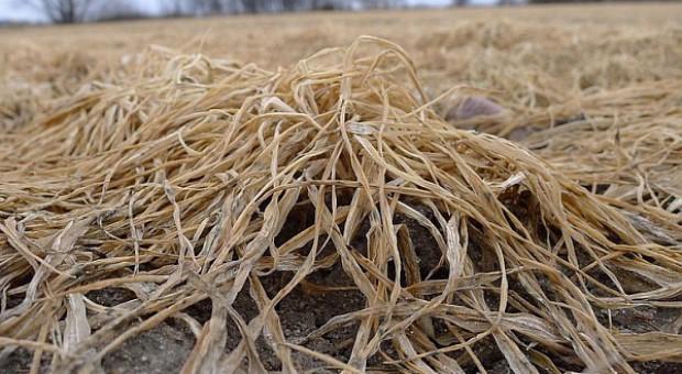 Prognozy zapowiadają wiosenne przymrozki – warto ubezpieczyć uprawy