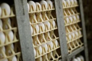 Inspekcja Handlowa: prawie 30 proc. jaj jest źle oznakowanych
