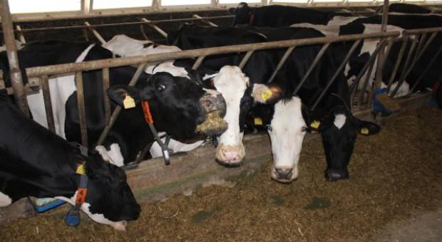 Dodatki dla krów wysokowydajnych