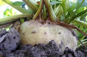 Prognozy plonów roślin okopowych KE