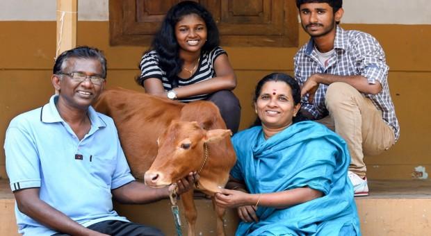 Najmniejsza krowa świata żyje w Indiach