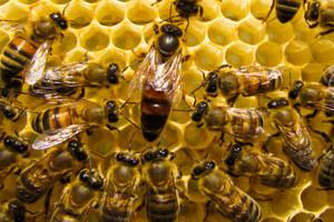 Zmienna pogoda w kwietniu może pomóc pszczelarzom