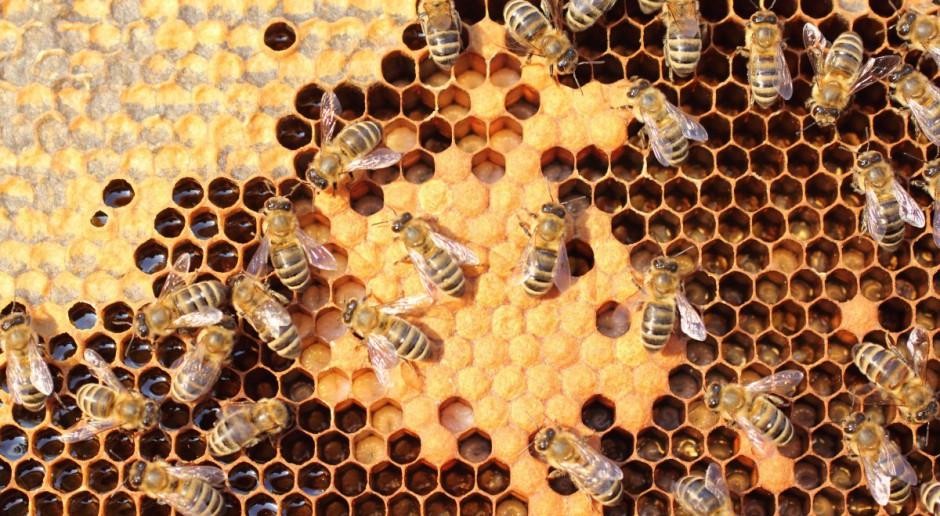 """ARR przyjmuje projekty w ramach mechanizmu """"Wsparcie rynku produktów pszczelich""""."""