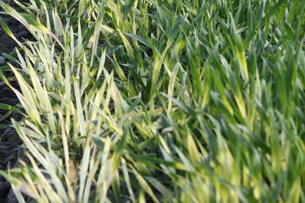 Sąsiad zniszczył herbicydem uprawę, możesz domagać się odszkodowania