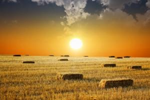 Ukraina poszukuje inwestorów rolniczych