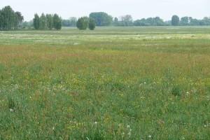 Spekulanci przejmą ziemię rolniczą w Polsce?
