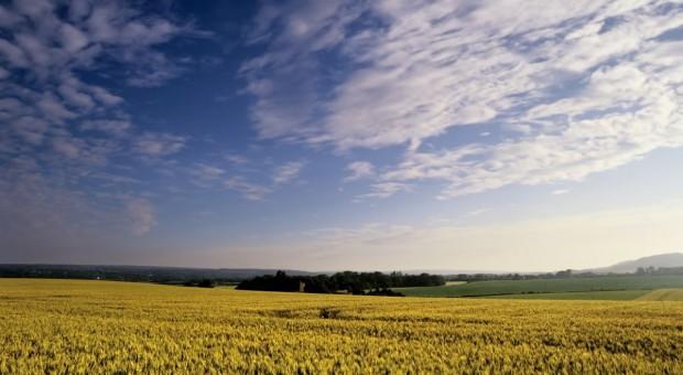 Ziemia od ANR przestała drożeć?