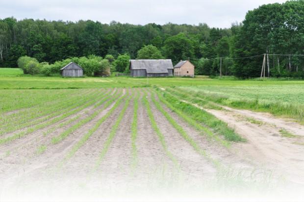 Druga dawka nawożenia kukurydzy azotem
