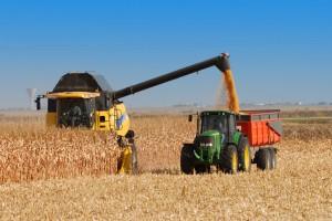 Prognoza dużych światowych zbiorów zbóż w sezonie 2015/16