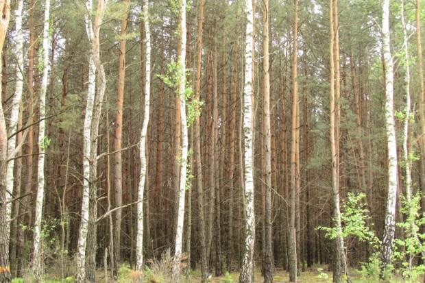 Nabór wniosków na zalesienie od połowy czerwca